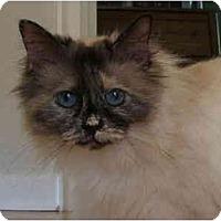 Adopt A Pet :: Muffett - Keizer, OR