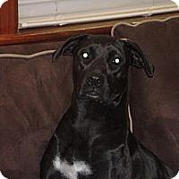 Adopt A Pet :: Maci - Washington, NC