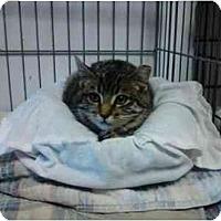 Adopt A Pet :: Dreyfuss - Erie, PA