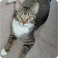 Adopt A Pet :: Tabatha - Westfield, MA