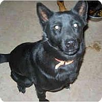 Adopt A Pet :: Sadie - Scottsdale, AZ