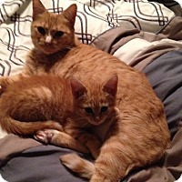 Adopt A Pet :: Nala - Pittstown, NJ