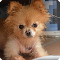 Adopt A Pet :: Peanut - bridgeport, CT