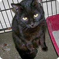 Adopt A Pet :: Cliff - Scottsdale, AZ