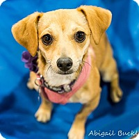 Adopt A Pet :: Emily - Henderson, NV