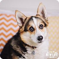 Adopt A Pet :: Ein - Portland, OR