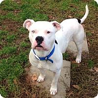 Adopt A Pet :: CASTLE - Coudersport, PA