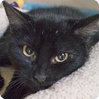 Adopt A Pet :: Otter - Redwood City, CA