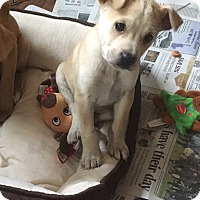 Adopt A Pet :: Bruce - Baltimore, MD