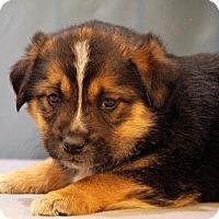 Adopt A Pet :: Elliot - Maynardville, TN