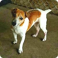 Adopt A Pet :: ANNIE - Terra Ceia, FL