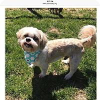 Adopt A Pet :: Lucky - LEXINGTON, KY