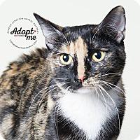 Adopt A Pet :: Ellie - Apache Junction, AZ