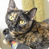 Adopt A Pet :: Jade 170086 - Atlanta, GA