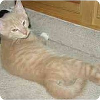 Adopt A Pet :: Radar - Colmar, PA