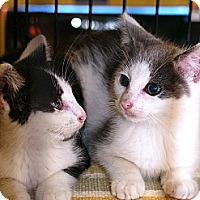 Adopt A Pet :: Alex and Jaxy - Pittstown, NJ