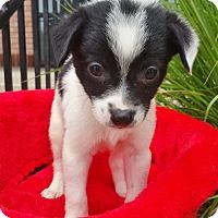 Adopt A Pet :: Oakley - Bridgeton, MO