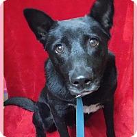 Adopt A Pet :: Winnie - Batesville, AR