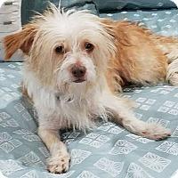Adopt A Pet :: Barbara - Meridian, ID