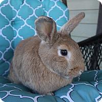 Adopt A Pet :: Cecilia - Hillside, NJ