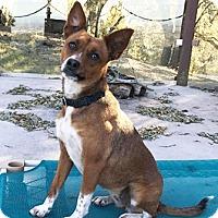 Adopt A Pet :: Sasha - Castro Valley, CA
