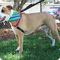 Adopt A Pet :: Bubba - Chico, CA