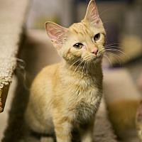 Adopt A Pet :: Reba - Columbia, TN