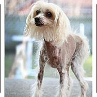 Adopt A Pet :: Bocelli (Bo is in NJ) - Gilford, NH
