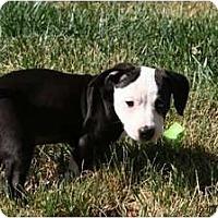 Adopt A Pet :: Snoopy - Fresno, CA
