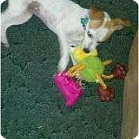 Adopt A Pet :: Candace - Cincinnati, OH