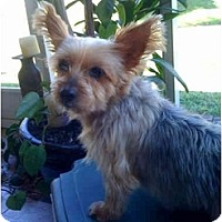 Adopt A Pet :: Penelope (Penny) - Ft Myers, FL