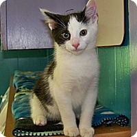 Adopt A Pet :: Ronnie - Dover, OH