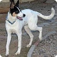 Adopt A Pet :: Krato - Phoenix, AZ