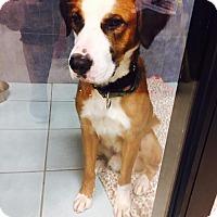 Adopt A Pet :: OTIS - Higley, AZ