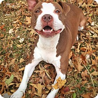 Adopt A Pet :: Sophie - Reisterstown, MD