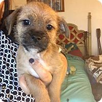 Adopt A Pet :: Ron - Brea, CA