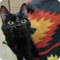 Adopt A Pet :: PRISS - Fort Wayne, IN
