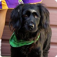 Adopt A Pet :: Sara - Tripod - Los Angeles, CA