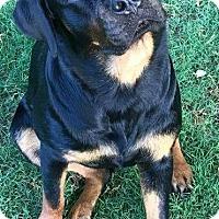 Adopt A Pet :: Uschi - Louisville, KY
