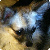 Adopt A Pet :: STRIDER - Riverside, CA