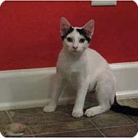 Adopt A Pet :: Joan Jett - Harrisburg, NC