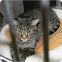 Adopt A Pet :: Tom - Greenville, SC