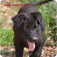 Adopt A Pet :: Nickers - New Boston, NH