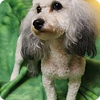 Adopt A Pet :: Lexie - Wytheville, VA