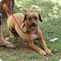 Adopt A Pet :: Luna - Londonderry, NH