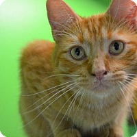 Adopt A Pet :: Comet - Estherville, IA