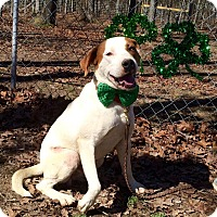 Boxer/Pointer Mix Dog for adoption in Tullahoma, Tennessee - Petey Too