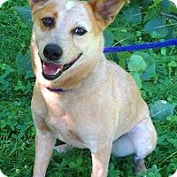 Adopt A Pet :: Tara - Metamora, IN