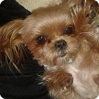 Adopt A Pet :: Gabby - Goodyear, AZ