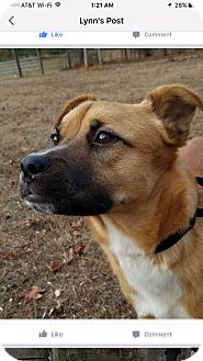 Shepherd (Unknown Type) Mix Dog for adoption in Woodstock, Georgia - Chance